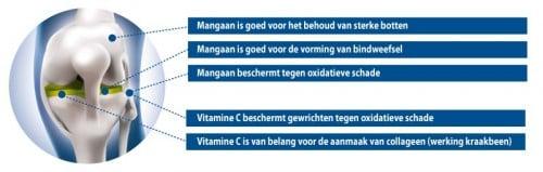 Werking Mangaan & vitamine C