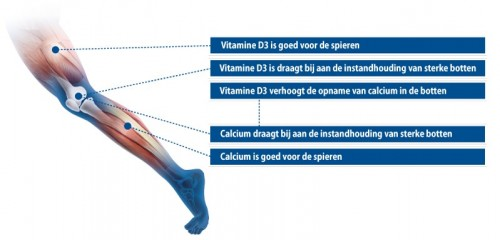 Werking Vitamine D3 & Calcium